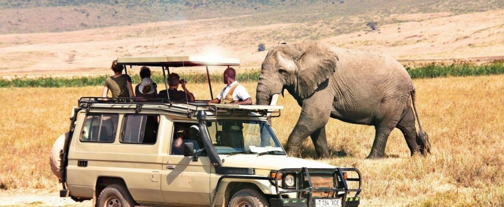 Tanzania Safari, the things you must do in Tanzania