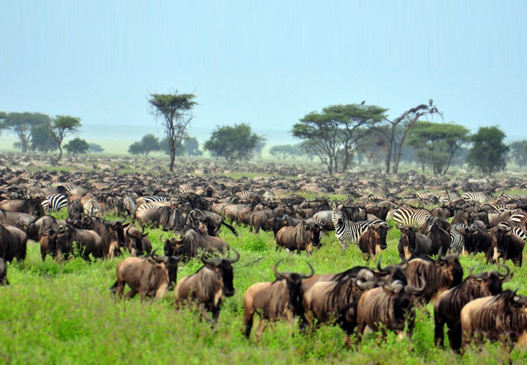 The Great Migration - the things you must do in Tanzania